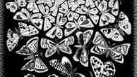butterflies-capa