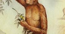 primatas-h