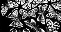 borboletas-h